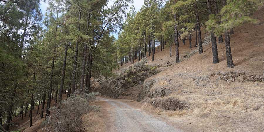trees-of-gran-canaria-canariaways.com