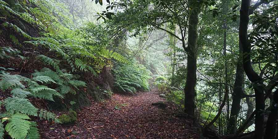 forests-la-gomera-canariaways.com