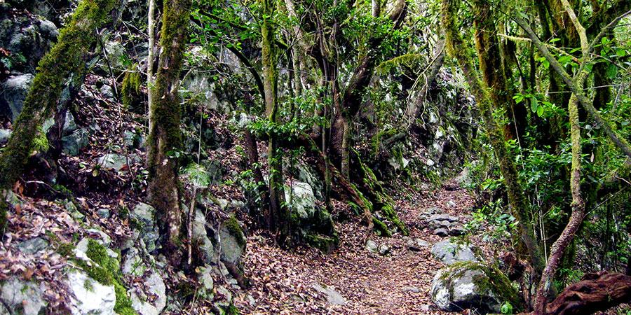 la-gonera-forest-hiking-canariaways