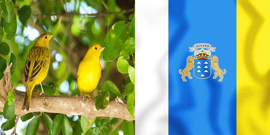 canary-bird-with-Canary-Islands-Flag-on-canariaways.com
